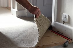 man pulling up carpet from floor showing underlay and gripper rods
